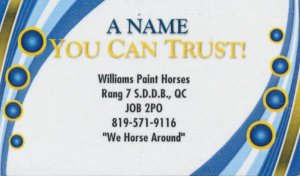 Williams Paint Horses